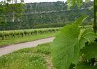 Régagnac - Balade au milieu des vignes_03 © Lot Tourisme - C. Sanchez