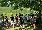 Saint Sernin découverte des vignes