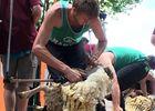 Tonte-de-Moutons-2