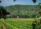 Vigne du Chateau Eugénie à Albas_11 © Lot Tourisme - C. ORY