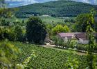 Vignes du Château Fantou à Prayssac_04 © Lot Tourisme - C. ORY