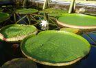 jardin eau 2