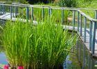 jardin eau 4