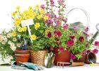 marché fleurs
