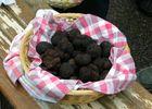 Marché aux truffes d'hiver à Limogne en quercy