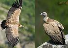 Dandelion_gite_spa_piscine_nature_eco_design_gitedegroupe_gorgesdutarn_millau_viaduc_aveyron_lozere_vautour