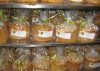 Boulangerie-pâtisserie Navarrine - Pastis I (Laurence Navarrine)