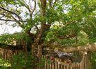 Cabane Papyjotte - vue d'ensemble