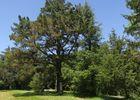 Arboretum de Payssas