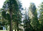 Parc-Pomme-I-OLORON-SAINTE-MARIE-OTHB-DI
