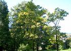 Parc-Pomme-II-OLORON-SAINTE-MARIE-OTHB-DI