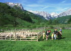 Randonnées avec âne en vallée d'Aspe