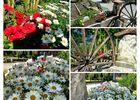 St-Miche-Escalus_Domaine du Cayre_compo fleurs charette