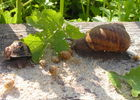 L'Escargot des Grands Crus - Bouzy