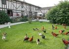 La-Ferme-Sympa-le jardin des poules