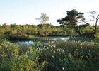 Réserve Naturelle Nationale des Pâtis d'Oger et du Mesnil-sur-Oger