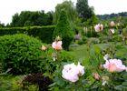 Roses et vivaces