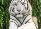 LOIMIP065V502RA7-Zoo Asson-6