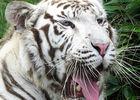 2016-zoo-asson-argeles-gazost