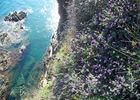 Argeles-nature-criques-de-porteils