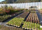 Étalage de plants en pot
