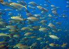 Parc Naturel Marin du Golfe du Lion 1