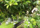 massina jardin arboré