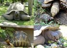 VALLEE DES TORTUES
