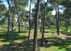 forest_pins_tennis_argeles_2015_4