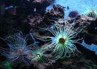 400-anemones_800