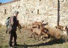 Randos avec les chèvres