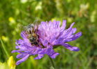 Animation atelier abeille apiculture_CPIE (1)