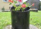 Géranium Back garden