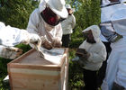 apiculture©cpievsl