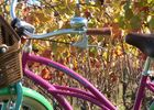 Original Vélo Tour - Balade dans les vignes de Pissotte - Pissotte -  PDS - 4