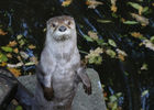 LOUTRE NZM