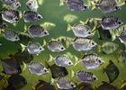 aquarium-vendee-talmont-mangrove