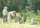 Le rucher de Saeix