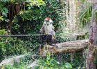Parc-Zoologique-Pont-Scorff-Morbihan-Bretagne-Sud-08