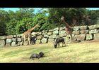 zoo_de_pont-scorff_decouvrez_le_monde_fascinant_de_la_faune_sauvage