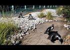présentation du zoo de pont scorff