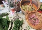 Cueillette et cuisine de plantes sauvages