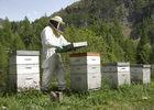 Les abeilles de Luc - Luc Marchand