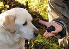 truffes haute marne cavage chien foret 2705.
