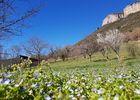 Le Mas Albizia - Environnement du Mas - Vue Causse Sud