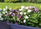 Fleurs et paysages (1)