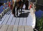 chevaux bac de ménil sud vallée mayenne slowlydays