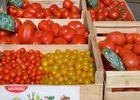 producteur maraicher horticulteur légumes fleurs 53 Mayenne vente directe foire photo par stephanie jeanneteau 2