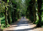sentier-d-interpretation-arboretum-pontmain-53-iti-cp greboval (10)