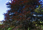 sentier-d-interpretation-arboretum-pontmain-53-iti-cp greboval (3)
